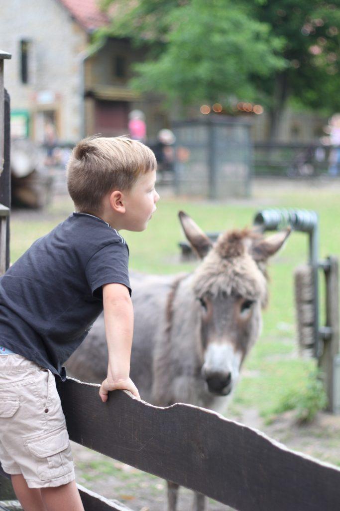 Tierpark Olderdissen Esel