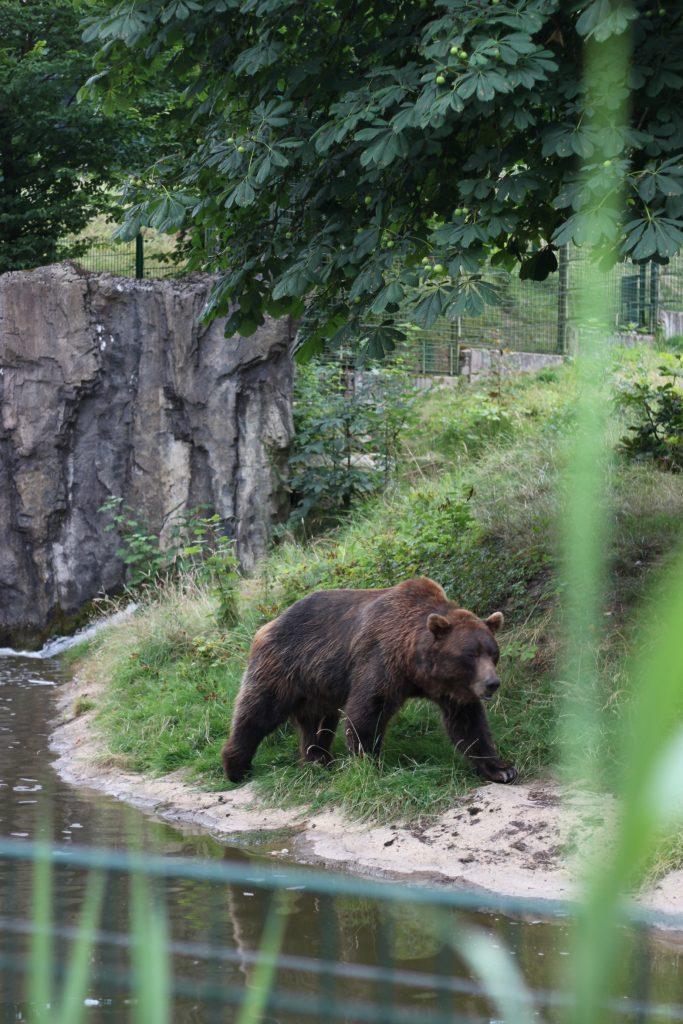 Tierpark Olderdissen Bär